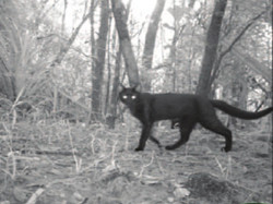 A trail camera allegedly showing the fitoaty