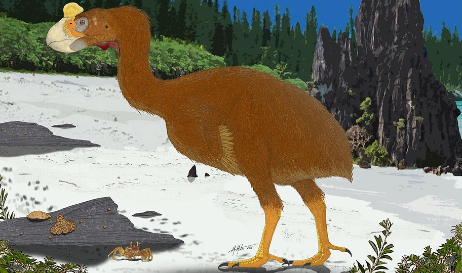 A reconstruction of silviornis