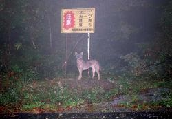 One of Hiroshi Yagi's 1996 photos