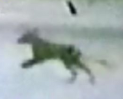 A screenshot from the 1973 Doyle footage