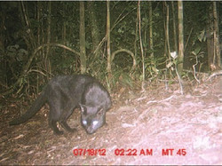 One of the trail camera photos showing a fitoaty