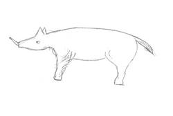 Dennis Dumas's sketch of the animal