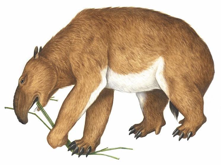 An illustration of a palorchestes