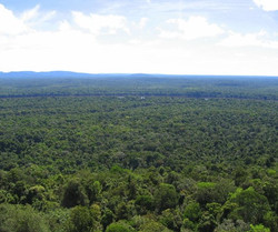 The Guyanese rainforest