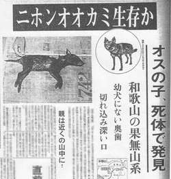 A newspaper article about the alleged wolf cub