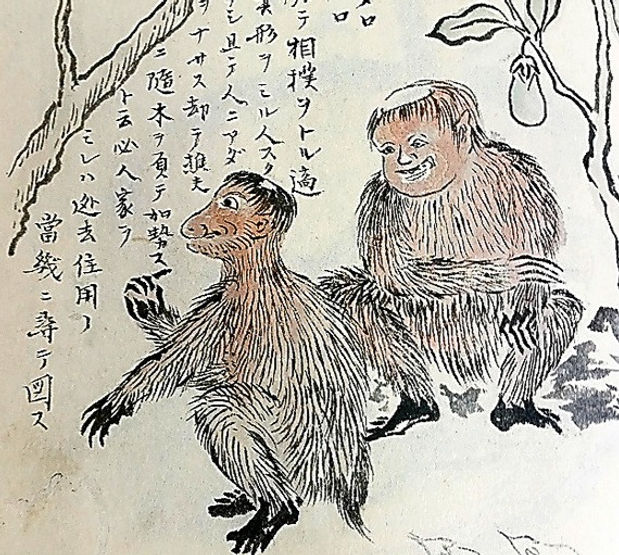 kenmun drawing in Minamijima Misc. Notes (c. 1853)