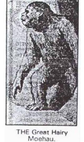A newspaper illustration of a moehau
