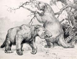 A Megatherium reconstruction by Robert Horsfall