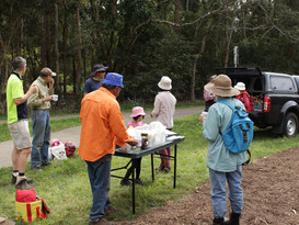 BushCare Big Day Out @ Meakin Park