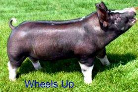 wheels-up-1-9f.jpeg