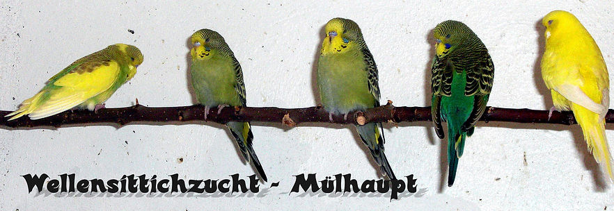 Wellensittichzucht-Muelhaupt.de