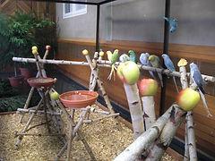 Vogelausstellung