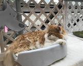 Tokyo Cat Guardian