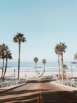 palmtree surf