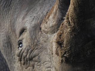 Rhino Economics