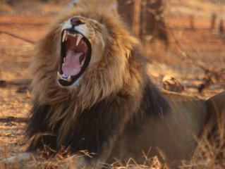 Lion's Hope