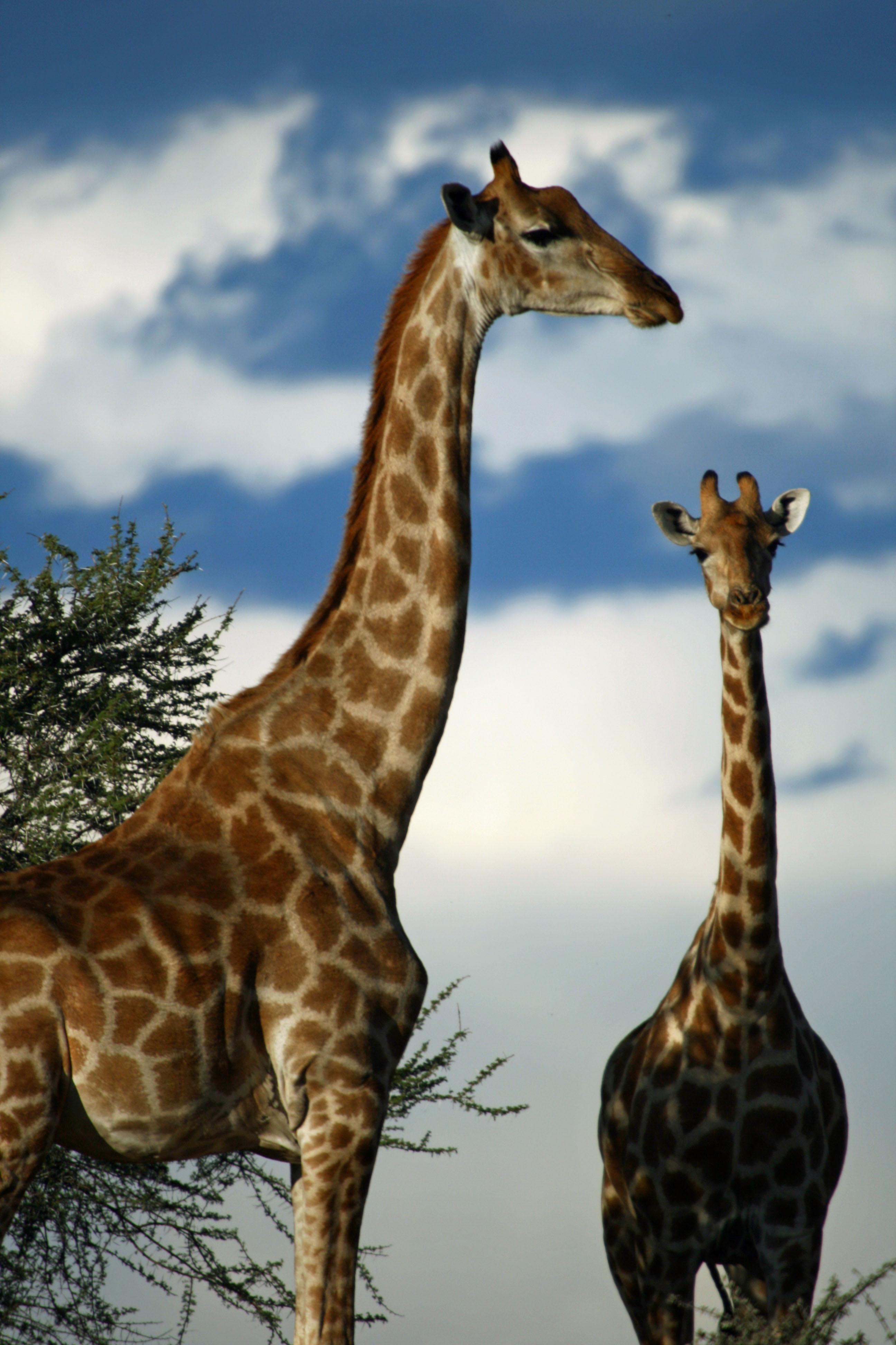 wildlifeSteveScott (3)