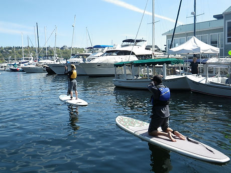 Rental paddle board in the water