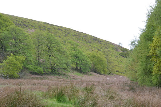 White Coppice