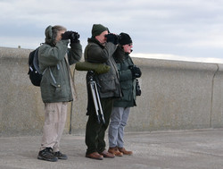 Members on walk to Rossall Point