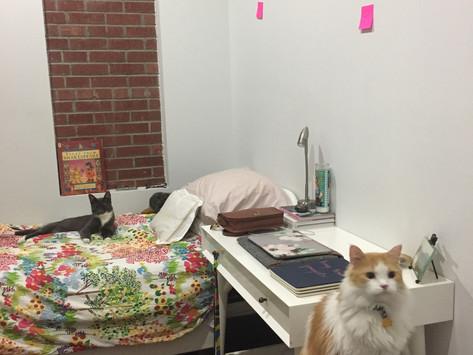 Brooklyn Apartment #3 Reveal