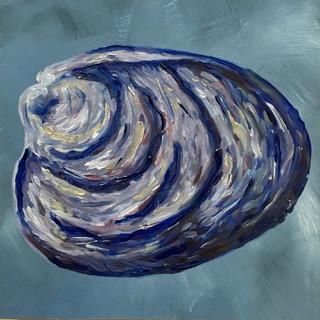 """Venus Ray Shell, 6""""x6"""""""