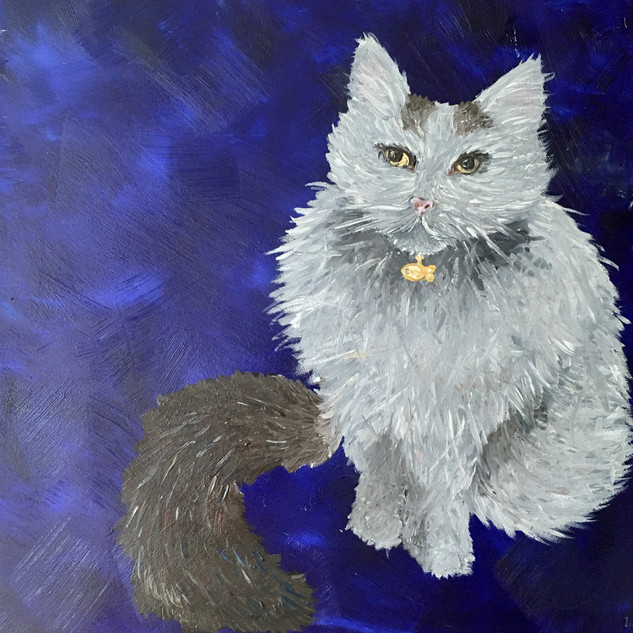 "Turkish Van, 12""x12"""