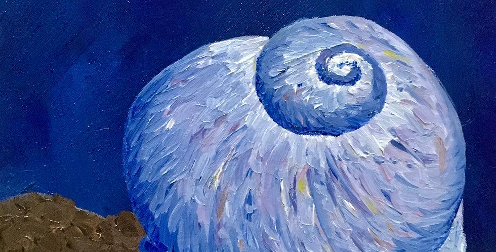 """Sea Snail, 6""""x6"""""""