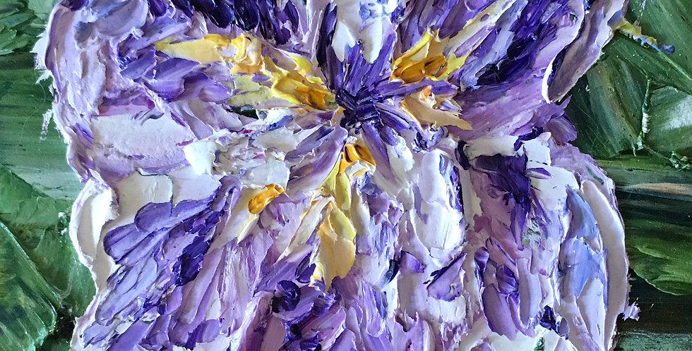 """Dutch Iris Study 2, 4""""x4"""""""