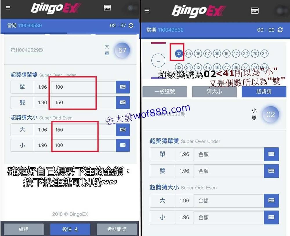 bingo bingo 單雙