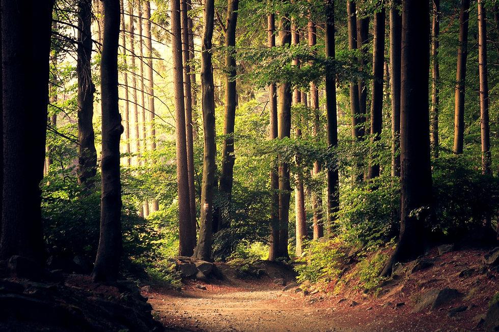 Beautiful%2520woodland%2520path_edited_edited.jpg