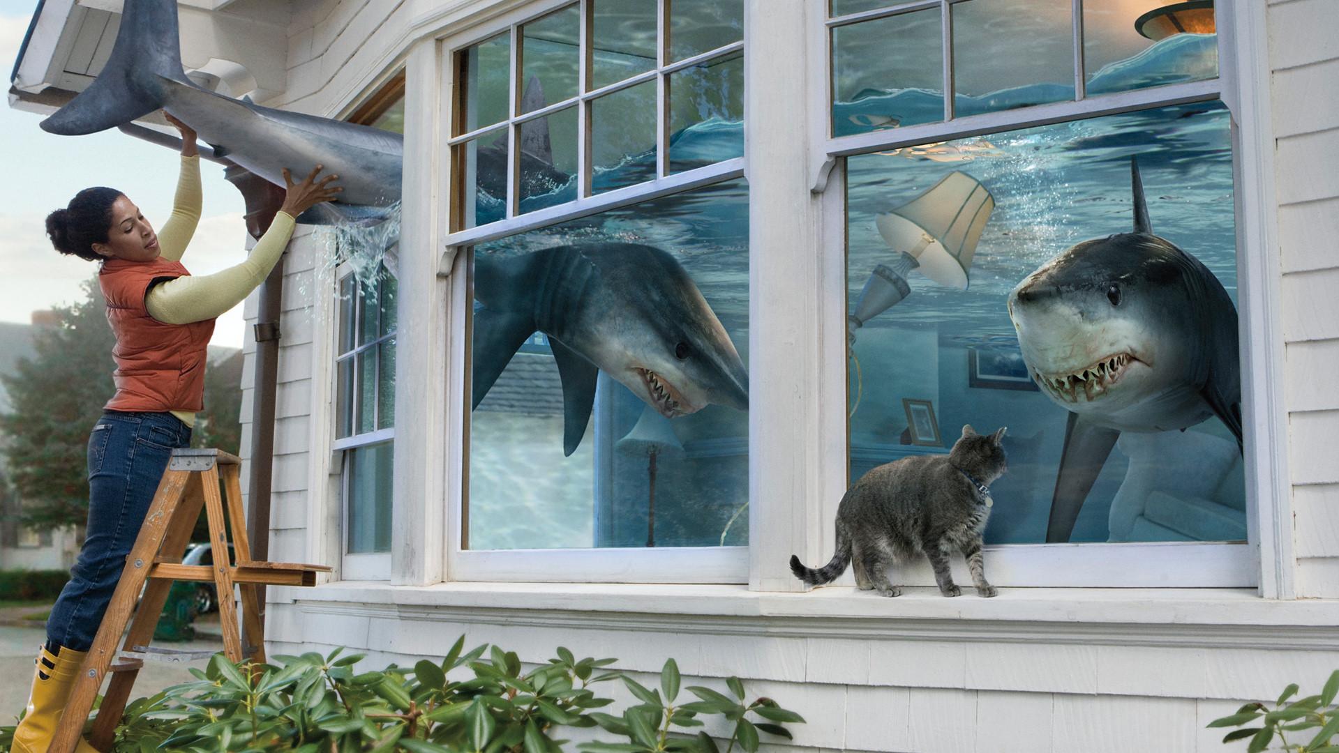 shark_detail.jpg