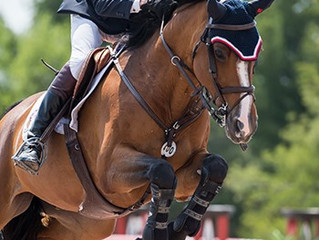 Ireland's Daniel Coyle Wins Two in a Row at Caledon Equestrian Park