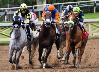 Creating a Winning Mindset With High Performance Horses