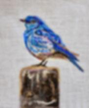 HarrisB_MtBluebird.jpg