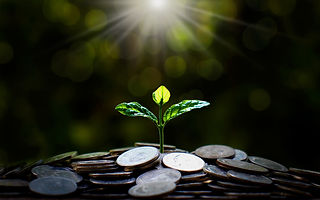 Plant trees from a pile of coins with th