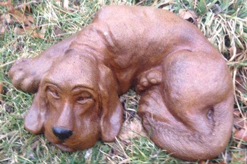 Dog Laying