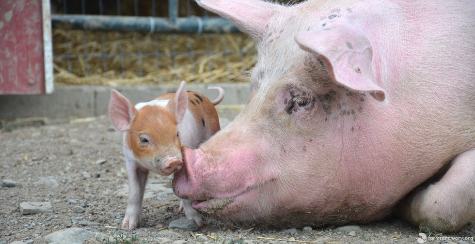 Cute Baby and Mama