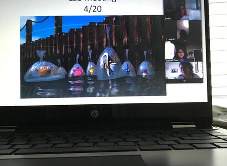 Lab Meeting via Zoom