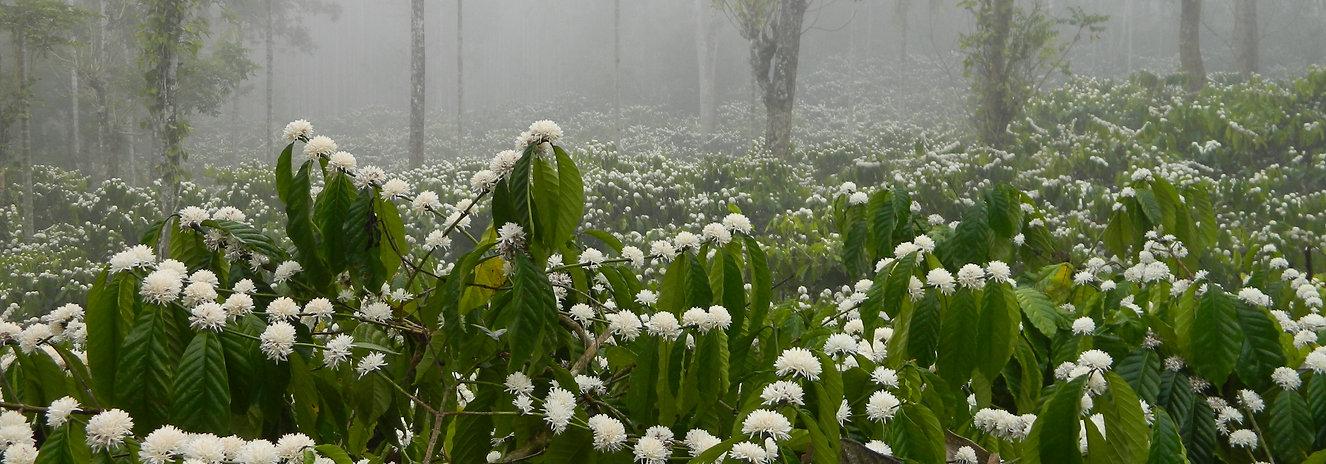 Ayurveda Kur in Kerala Indien, Erfahrungsbericht