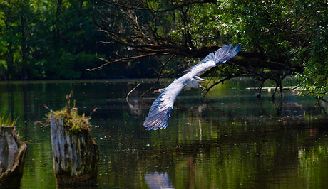 Naturfotografie Brandenburg Fotograf Brandenburg