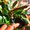 Thumbnail: Blue tigers eye spliff ring