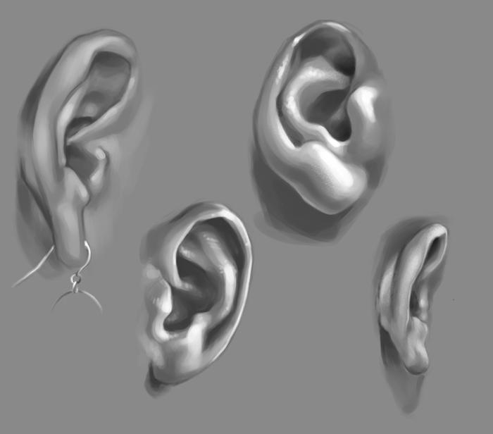 ear studies 1