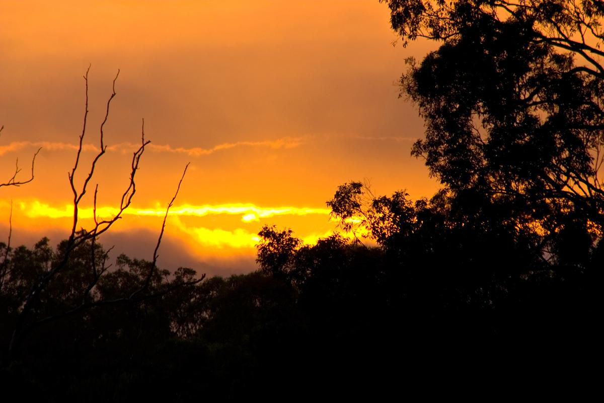 Dawn DH_003