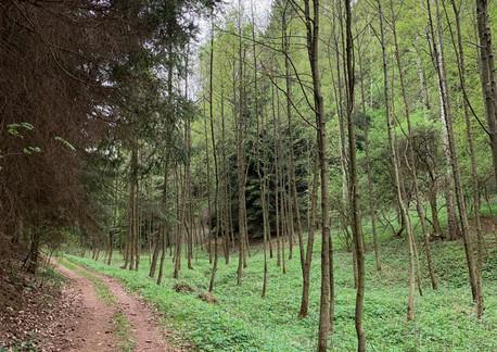 Cesta z areálu do lesa ke studánce srdce