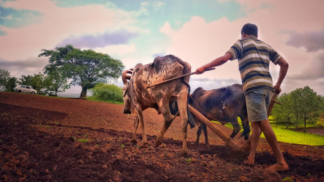 Jawhar Farm