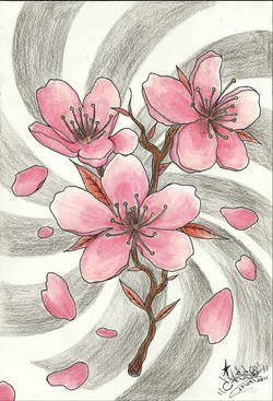 Sakuras