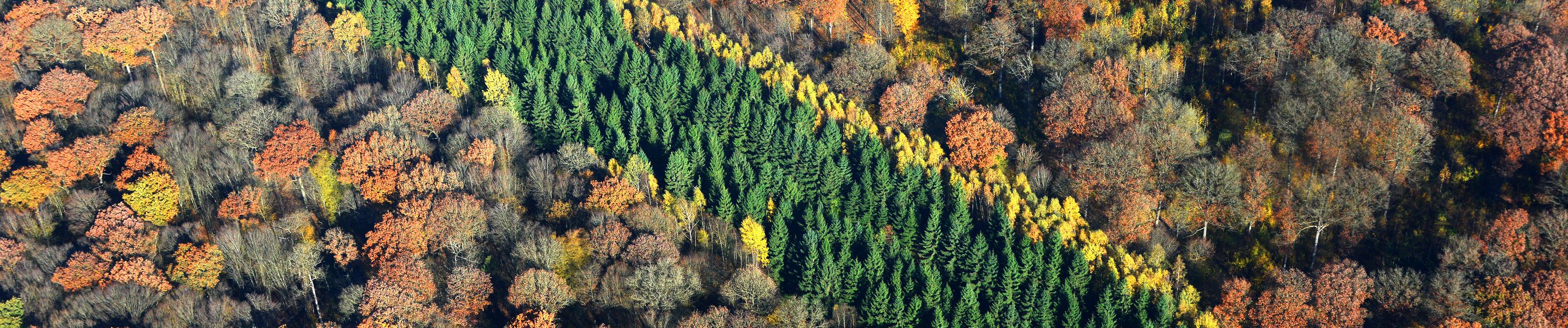 Forêt Valjoly - 59