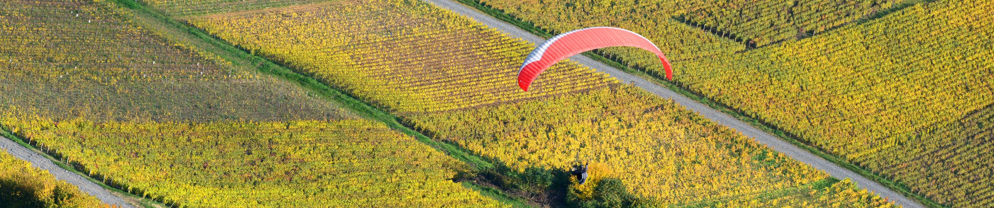 Vignes Champagne Château Th - 02