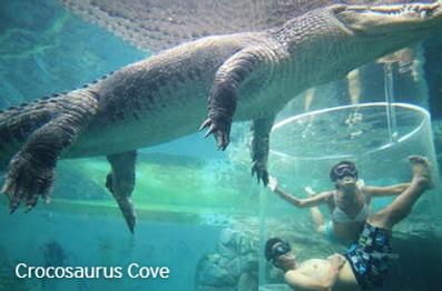 Croc Cove.png